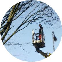 Bomen onderhoud