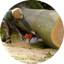 Bomen verwijderen