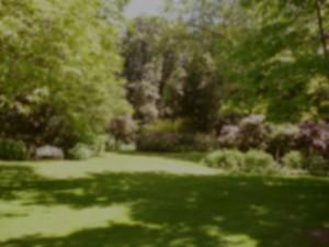 Tuinonderhoud